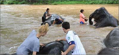 thailand-elephants.jpg